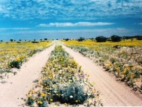 Birdsville Track Image